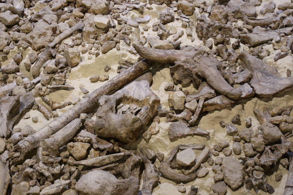 Museo nazionale del Paleolitico di Isernia