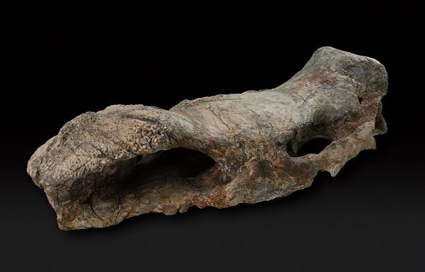 Dettaglio di un osso fossile